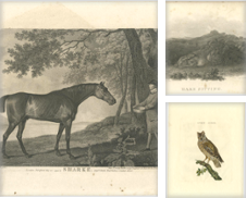 Antique Animal Prints Curated by Bartele Gallery - The Netherlands