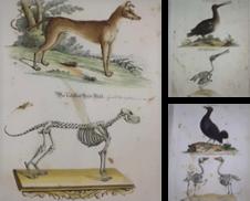 Graphik aus der Kulturgeschichte Tiere Sammlung erstellt von Aegis Buch- und Kunstantiquariat