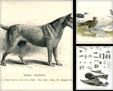 Animales de Orbis Antique Prints