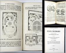 Natural history, geology, mineralogy Sammlung erstellt von Hugues de Latude