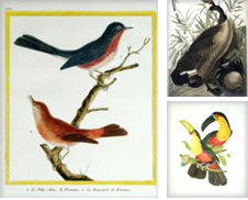 Ornithology Curated by Arader Galleries of Philadelphia, PA