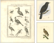 Antique Bird Prints Curated by Bartele Gallery - The Netherlands