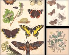 Entomologie erstellt von Carl Adler's Buch- und Graphikkabinett