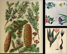 Botanik Sammlung erstellt von Antiquariat Gertrud Thelen