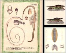 Amphibien, Schlangen, Reptilien und Würmer Sammlung erstellt von Antiquariat Heinz Tessin