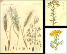 Graphik - Botanik Sammlung erstellt von Franziska Bierl Antiquariat