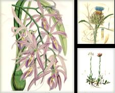 Botanik / Pflanzen (Botanische Graphik) erstellt von Antiquariat Hagena & Schulte GbR