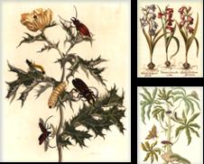 Botanical prints Curated by Antiquariat Reinhold Berg eK Inh. R.Berg