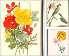 Botany Curated by Donald A. Heald Rare Books (ABAA)