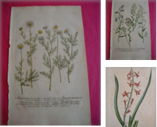 Prints (Botanical) Curated by 2 sellers