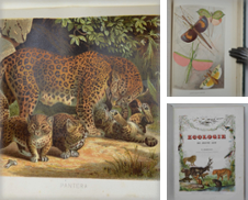 Animali Proposé par Studio Bibliografico Benacense