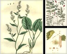 Botanik Sammlung erstellt von Antiquariat Nikolaus Struck