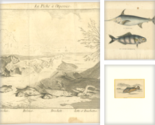 Antique Fish Prints Curated by Bartele Gallery - The Netherlands