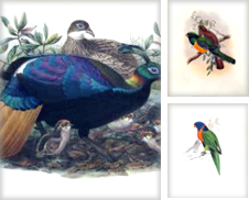 Ornithology Curated by Arader Galleries San Francisco