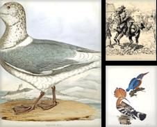 Zoologie Sammlung erstellt von Antiquariat Nikolaus Struck