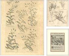 Antique Botany Prints Curated by Bartele Gallery - The Netherlands