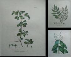 Pflanzen Sammlung erstellt von Antiquariat Bücher & Graphik