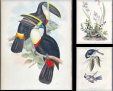 Bird Curated by Trillium Antique Prints & Rare Books