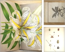 Biologie Sammlung erstellt von Matthaeus Truppe Antiquariat